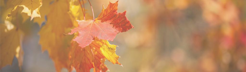 Mindfulness herfstbladeren